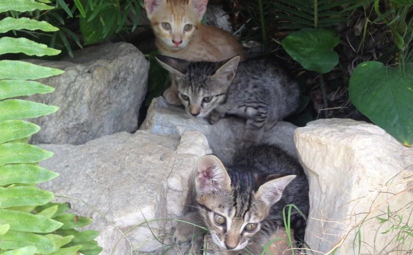 Kitten Diaries Part -3 -The playful kittens